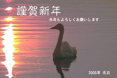 nen2005